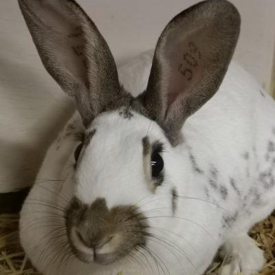 konijn (1)